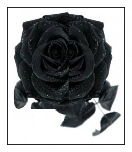 Philippe Parrot : Poème contemporain 13 : Rose noire dans Poésie rose-noire-261x300