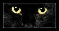 Philippe Parrot : Poème d'hier 68 : Dans les yeux des chats