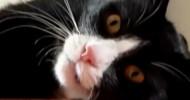 Philippe Parrot : Poème d'hier 88 : Ma chatte ronronneuse