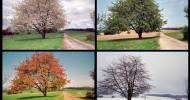 Philippe Parrot : Poème contemporain 200 : Une vie à rebours au fil des saisons