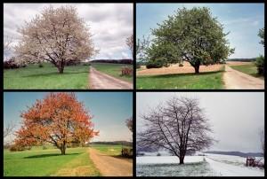 Au rythme des saisons