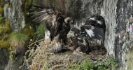 Philippe Parrot : Poème contemporain 250 : L'envol de l'aigle