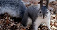 Philippe Parrot : Poème contemporain 321 : L'écureuil et la fin du monde