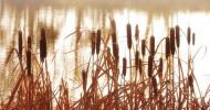 Philippe Parrot : Poème contemporain 339 : L'oiseau et le roseau