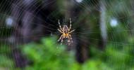 Philippe Parrot : Poème contemporain 387 : Deux araignées