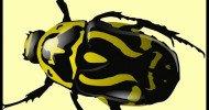 Philippe Parrot ; Poème contemporain 482 : Le scarabée d'or